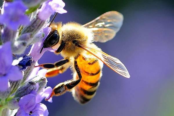 api-lunigiana-toscana-ambiente.jpg