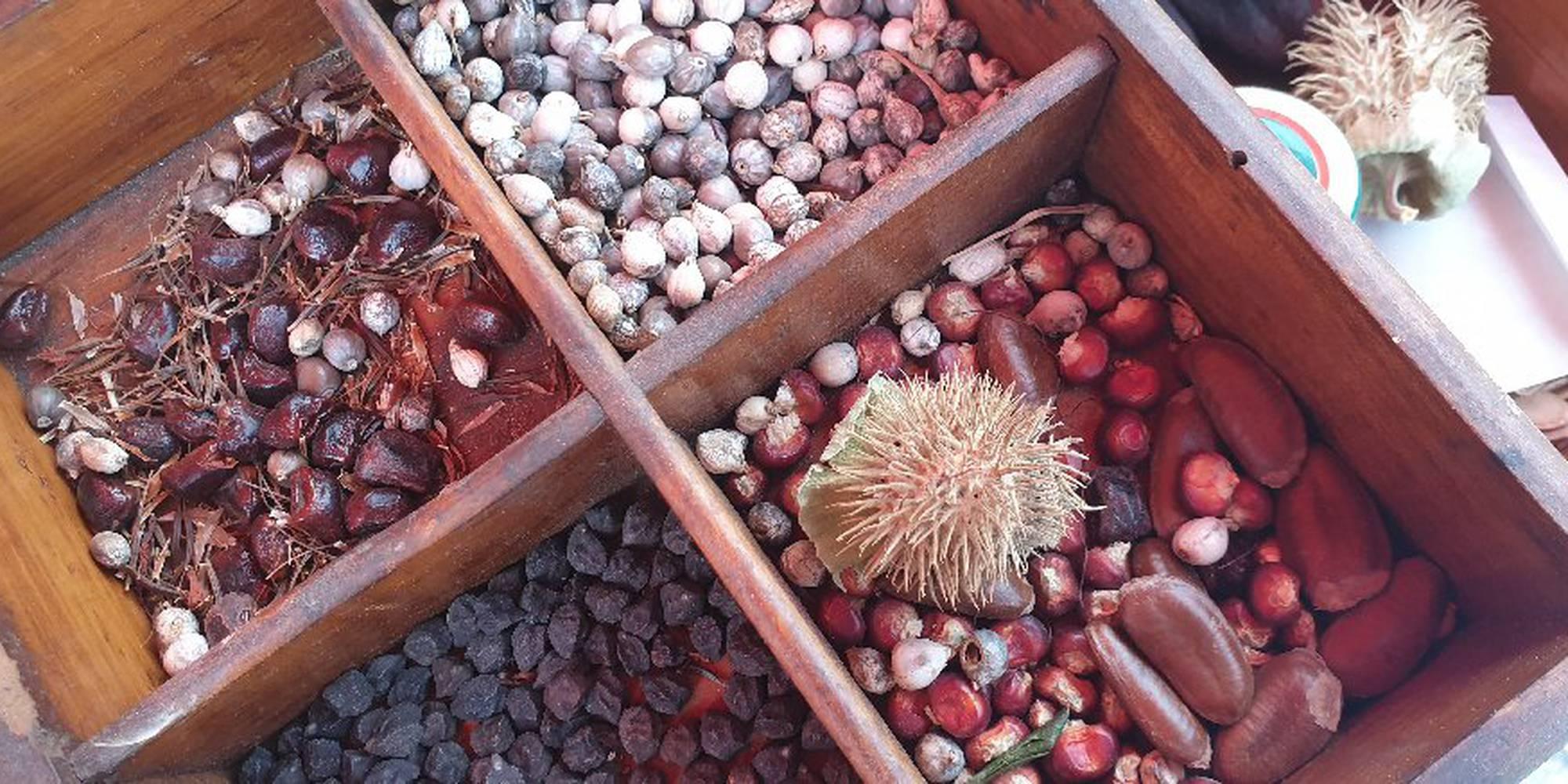 scambio di semi.jpg